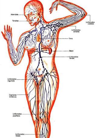 figura drenaje linfatico manual y deportistas