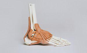 pie- anatomia-osteo9